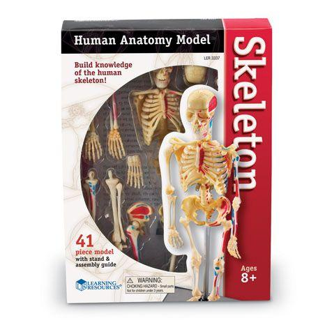 Corpul uman - Sistemul osos - 41 piese