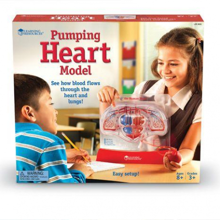 Set educativ copii - Cum functioneaza inima