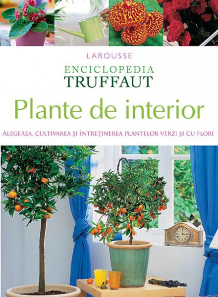 Plante de interior de Larousse
