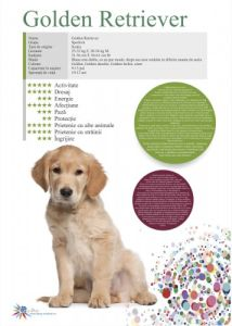 Afis Golden Retriever 50 x 70 cm