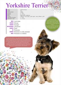 Afis Yorksire Terrier 50 x 70 cm