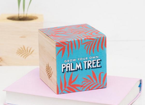 Palmier de casa