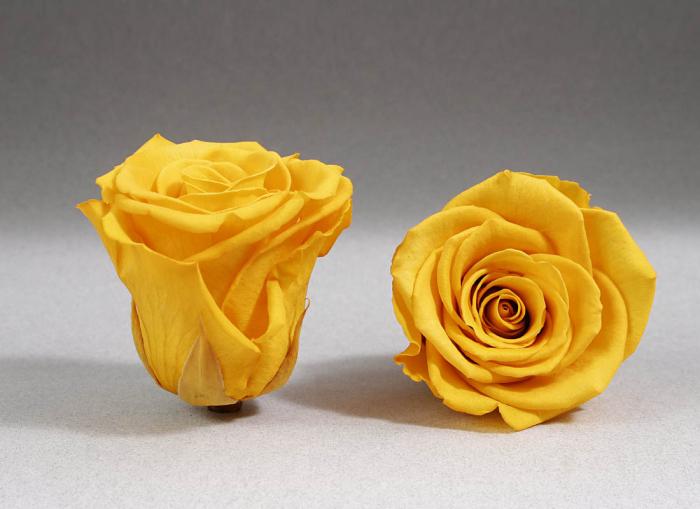 Fir de trandafir criogenat galben 0