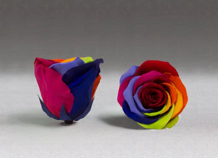 Fir de trandafir criogenat Multicolor 0