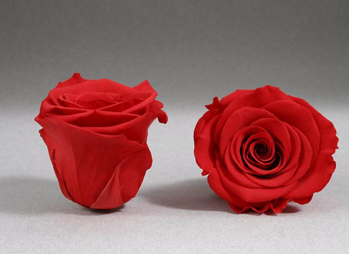 Fir de trandafir criogenat rosu aprins 0