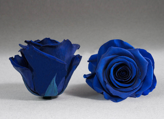 Trandafir criogenat albastru electric Giftbox 0