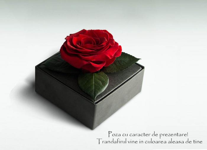 Trandafir criogenat galben Giftbox 1