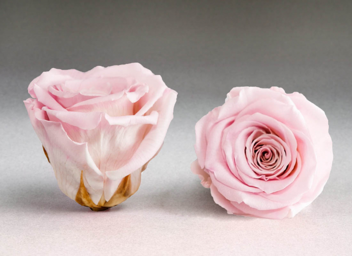 Trandafir criogenat roz Giftbox 0