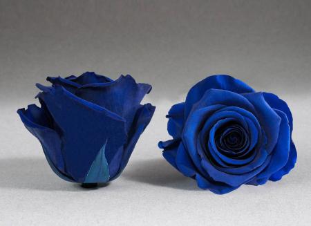 Trandafir criogenat albastru electric Giftbox0