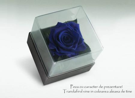 Trandafir criogenat albastru electric Giftbox2