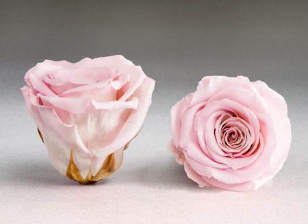 Trandafir criogenat roz Giftbox0