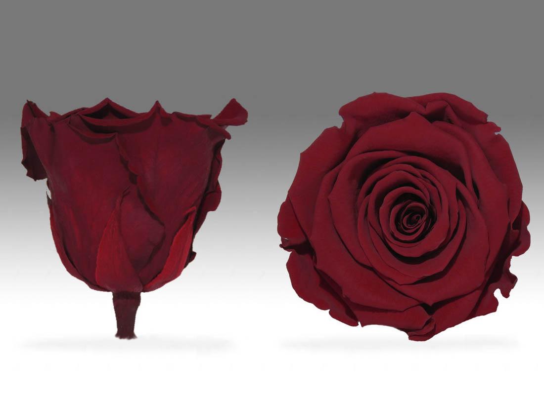 trandafiri criogenati pentru mama nascuta in zodia