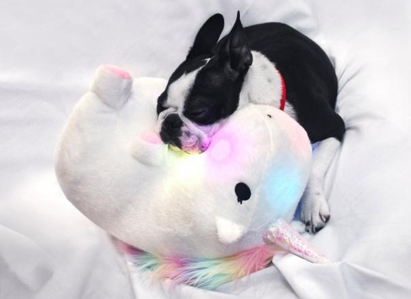 Perna Unicorn cu Lumini Colorate