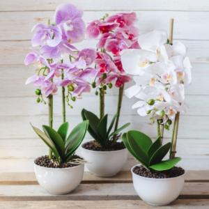 Flori decor - 15x50 cm