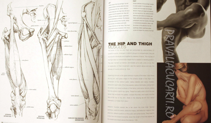 Anatomy for the Artist 1