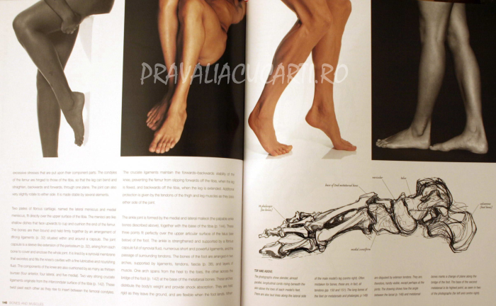 Anatomy for the Artist 2