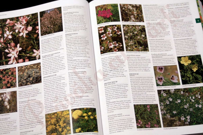 Botanica: The Illustrated A-Z of Over 10,000 Garden Plants and How to Cultivate Them 3