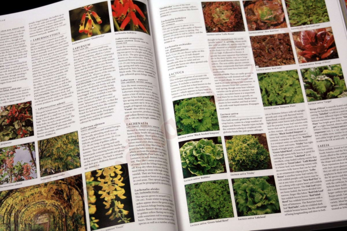 Botanica: The Illustrated A-Z of Over 10,000 Garden Plants and How to Cultivate Them 5