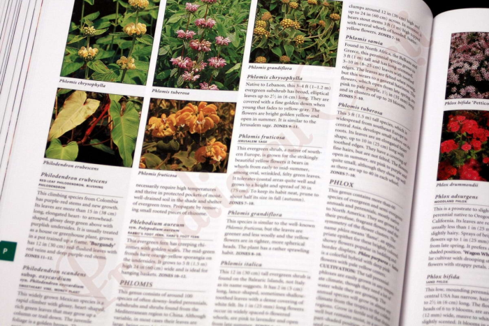 Botanica: The Illustrated A-Z of Over 10,000 Garden Plants and How to Cultivate Them 8