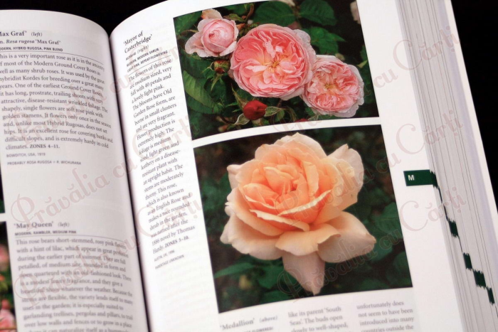Botanica's Pocket - ROSES - over 1000 pages & over 2000 roses listed 4