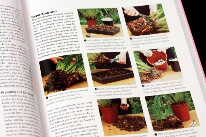 Growing ORCHIDS. The Complete Practical Guide to Orchids and Their Cultivation 3