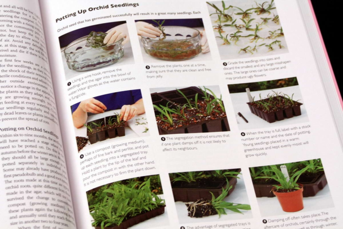 Growing ORCHIDS. The Complete Practical Guide to Orchids and Their Cultivation 5