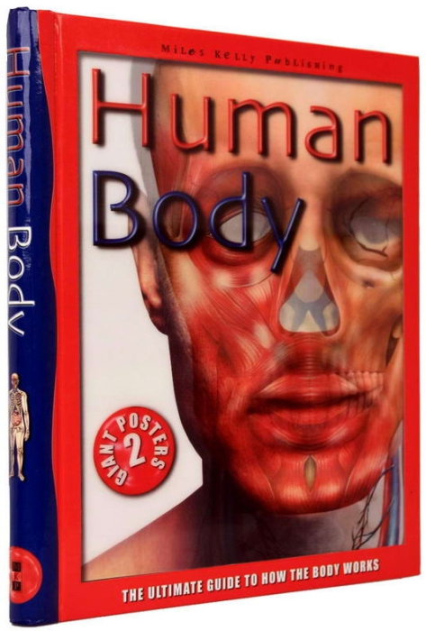 Human Body. The Ultimate Guide to How the Body Works 1