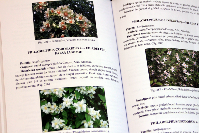 Enciclopedia plantelor decorative - Volumul 1 - ARBORI SI ARBUSTI 3