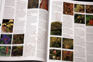 Botanica: The Illustrated A-Z of Over 10,000 Garden Plants and How to Cultivate Them6