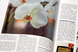 Growing ORCHIDS. The Complete Practical Guide to Orchids and Their Cultivation4