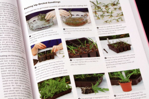 Growing ORCHIDS. The Complete Practical Guide to Orchids and Their Cultivation5
