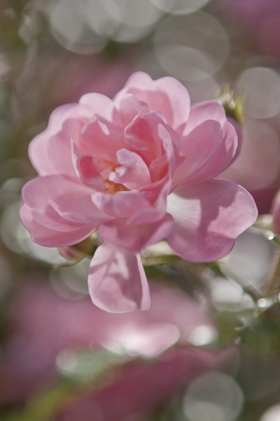 Fototapet 4-713 Bouquet 0