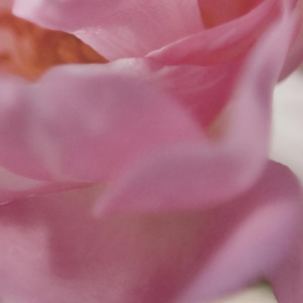 Fototapet 4-713 Bouquet 1
