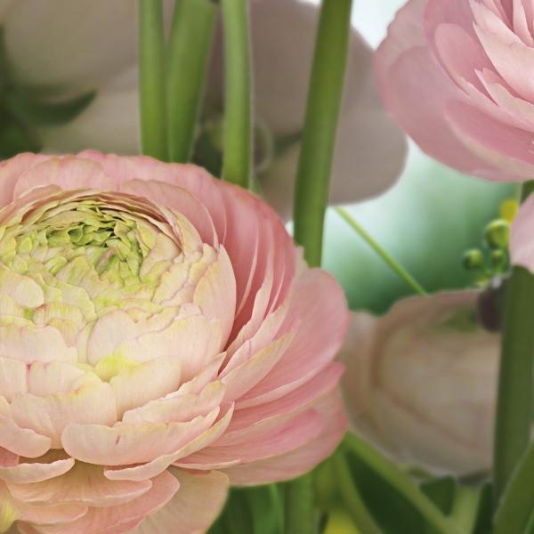 Fototapet 8-894 Gentle Rose 1