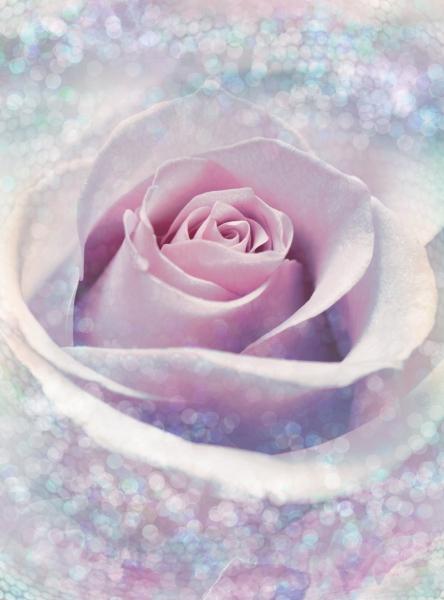 Fototapet XXL2-020 Trandafir roz 0