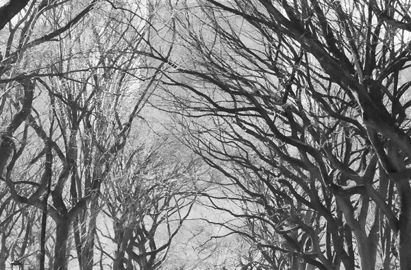Fototapet 00607 Poteca poetilor New York 0
