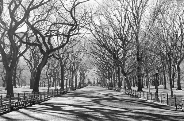 Fototapet 00607 Poteca poetilor New York 1