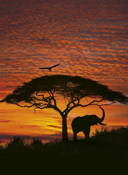 Fototapet 4-501 Apus African 0