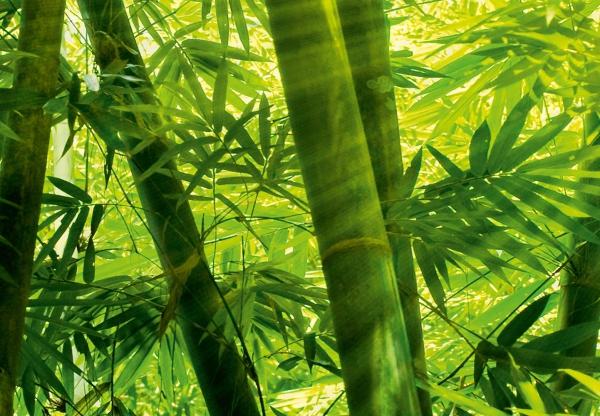 Fototapet 00123 Padurea de bambus 1