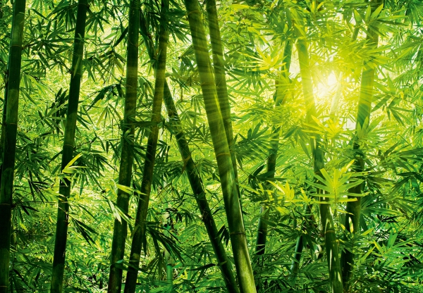 Fototapet 00123 Padurea de bambus 0