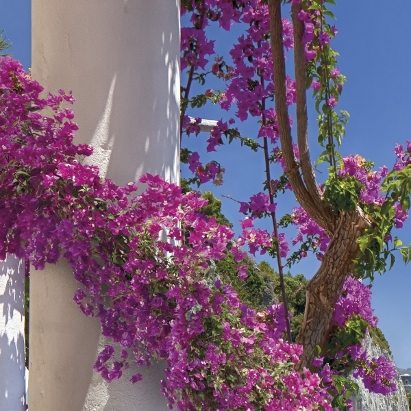 Fototapet 8-931 Amalfi 1
