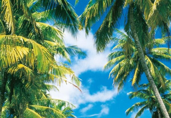 Fototapet 00273 Insula tropicala 1