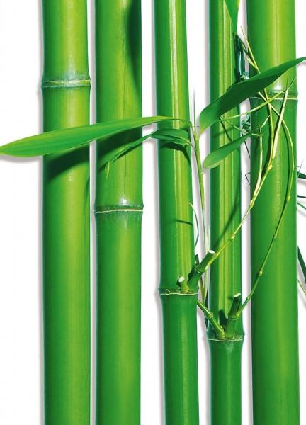 Fototapet 00421 Bambus 1
