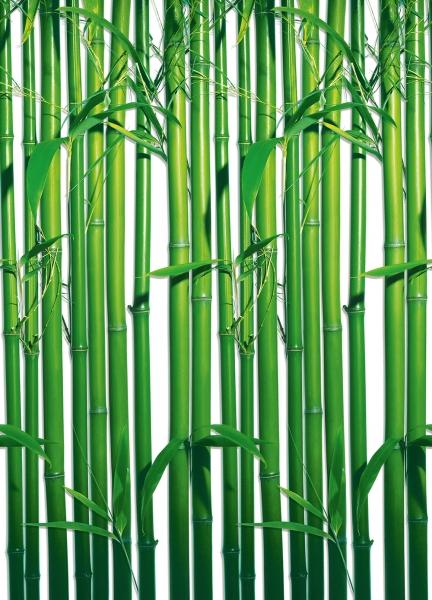 Fototapet 00421 Bambus 0