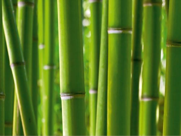 Fototapet FTS 0170 Bamboo 0