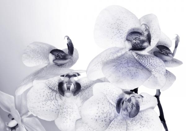 Fototapet FTS 1306 Orhidee 0