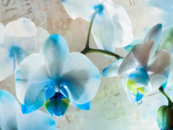 Fototapet FT 1433 Flori albastre 0