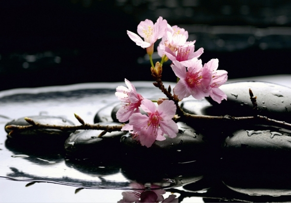 Fototapet FTS 0185 Flori roz si pietre 0