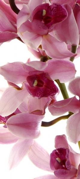 Fototapet FTV 1514 Orhidee 0