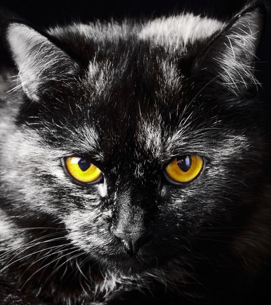 Fototapet FTL 1605 Pisica neagra 0